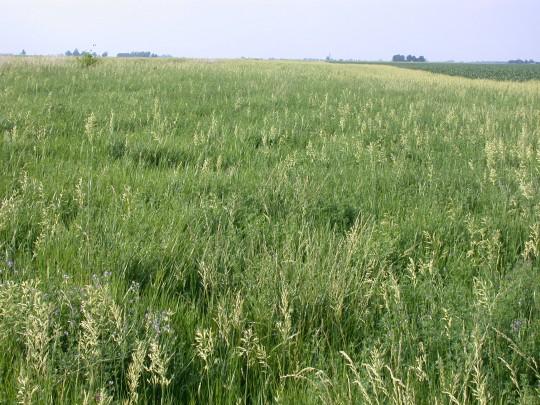 European corn borer action site.