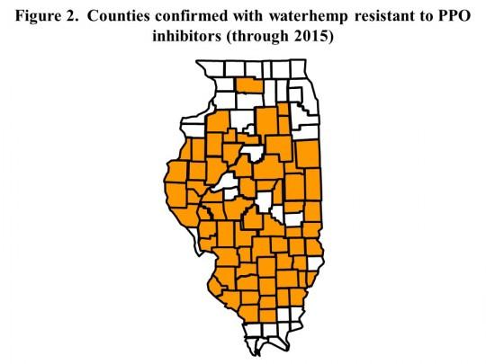 PPO-resistant waterhemp in Illinois