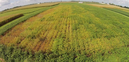 Figure. Aerial picture of the 2016 Commercial SDS Variety Trial at the Northwestern Illinois Ag R&D Center in Monmouth. The difference in variety maturity is evident in this picture. Moving left to right are varieties in Early MG II, Late MG II, Early MG III and Late MG III.