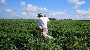 Image of sweep net sampling in soybean